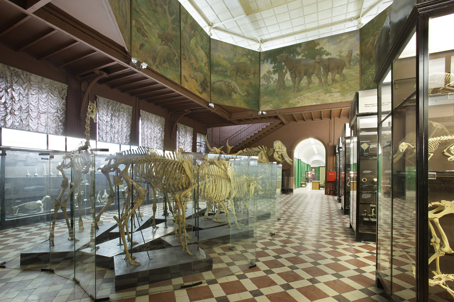 The Hall of the comparative anatomy of the Zoological Museum of Moscow State University. Photo: Margarita Fedina